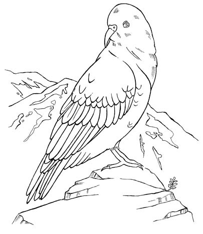 new zealand coloring pages - new zealand colouring pages sketch coloring page